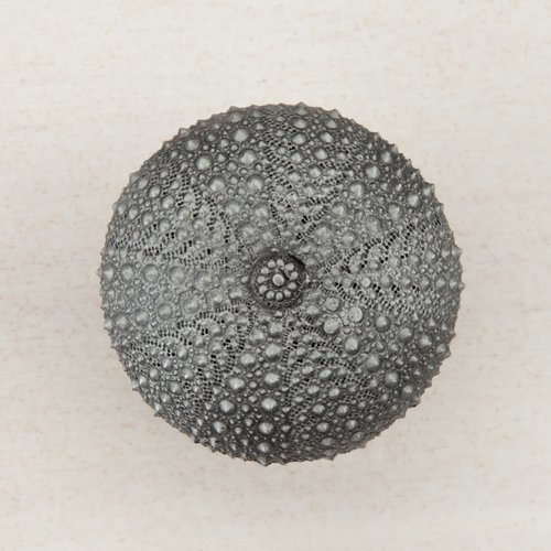 Acorn Manufacturing Sea Urchin Knob 1-1/2 inch Diameter Antique Pewter DP7PP